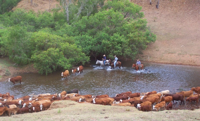 If you're lucky, you may see us mustering